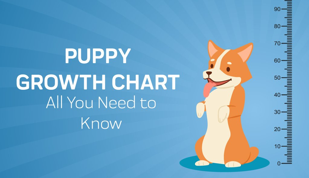 This image has an empty alt attribute; its file name is Puppy-Grow-Chart-By-Month-_-Breed-Size-with-FAQ-All-You-Need-To-Know_1_3_1024x1024.jpg